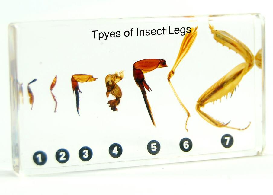 Forex leg type even